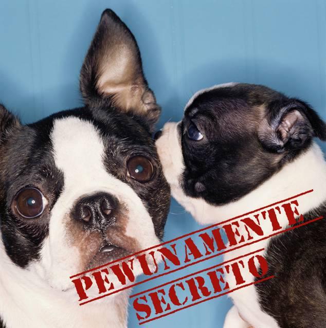 Secretos Pewunos que intentaste ocultar… Hasta que tu sonrisa te delató!