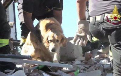 Romeo, 9 días después del terremoto en Italia