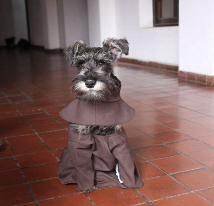 Un nuevo monje