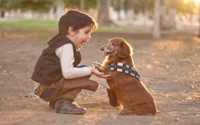 Han Solo y Chewbacca.