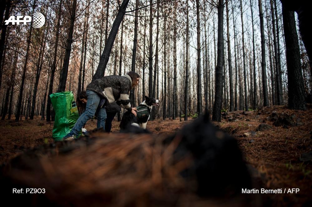 Cães ajudam em reflorestamento de áreas devastadas por incêndios